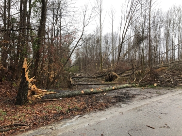 Damage to trees caused by a tornado in Walters, Virginia. Photo by NWS Storm Survey
