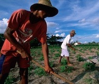 Farm laborers in Brazil