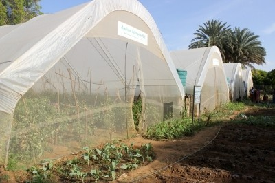An oasis in the desert: Greenhouse farming in Turkwell, Turkana farming vegetables using drip irrigation
