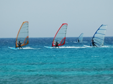 Four people windsurfing