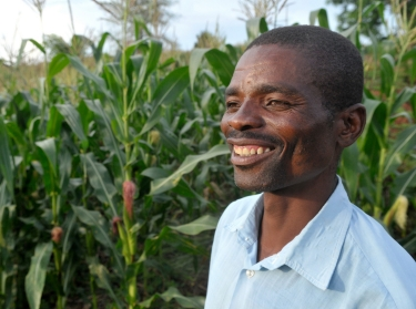 Double maize yields for Malawian farmer with conservation agriculture