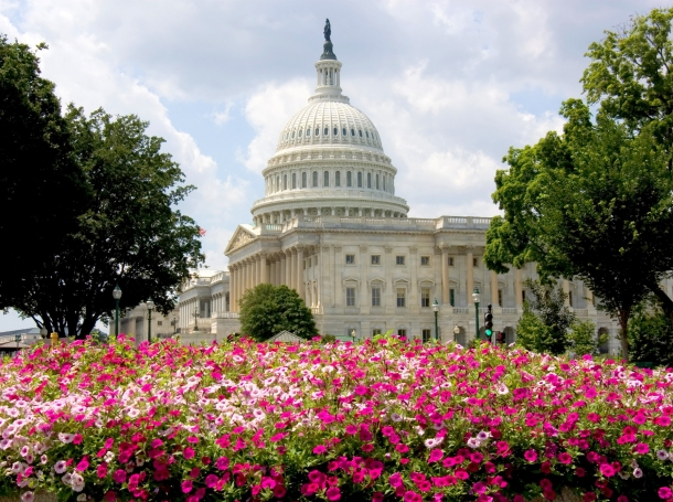 U.S. Capitol building with summer flowers