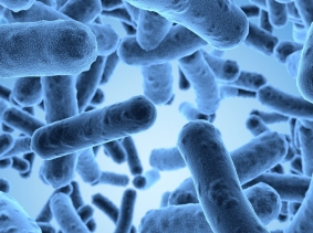 High-resolution 3D rendering of bacteria under a scanning microscope, photo by beawolf/Fotolia