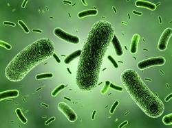 A green bacteria colony