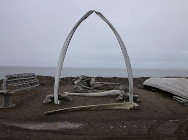The bones of a bowhead whale, a food source and cultural icon of the native Inupiat peoples who have lived in Alaska for centuries