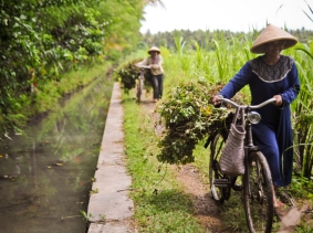 Indonesian farmers transporting crops beside an irrigation canal, photo by Asian Development Bank/CC BY 2.0