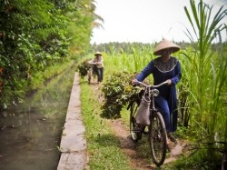Indonesian farmers transporting crops beside an irrigation canal
