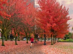 Woman jogging in Tom McCall Waterfront Park, Portland, Oregon