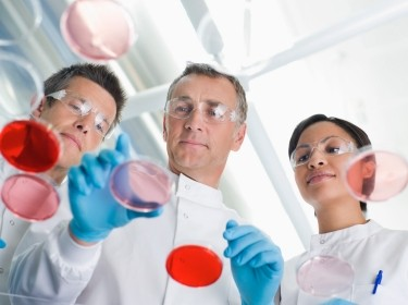 Three scientists working in a lab looking at petri dishes