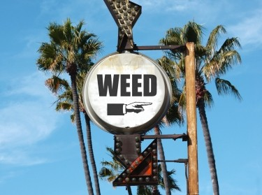 'Weed' sign with arrow and palm trees