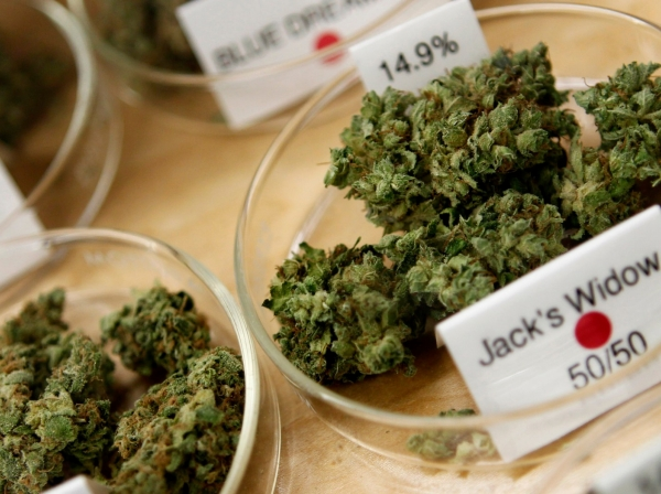 Marijuana buds and their degree of potency are shown in a medical marijuana dispensary in Oakland, California, June 30, 2010