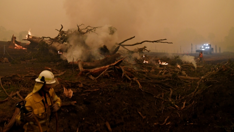 A burning gum tree is felled to stop it from falling on a car in Corbago, as bushfires continue in New South Wales, Australia, January 5, 2020, photo by Tracey Nearmy/Reuters