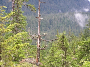 "Tongass National Forest, Alaska, <a href=""https://commons.wikimedia.org/wiki/File:Tongass_National_Forest_17.jpg"">photo</a> by <a href=""https://commons.wikimedia.org/wiki/User:Gillfoto"">gillfoto</a>/<a href=""https://creativecommons.org/licenses/by-sa/4.0/deed.en"">CC BY-SA 4.0</a>"