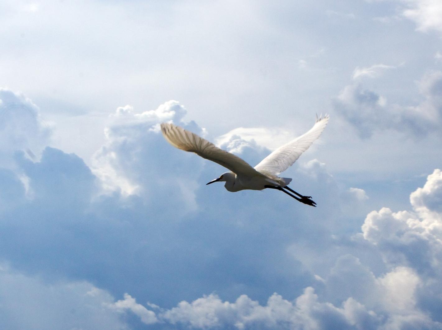 A bird soars over the gulf
