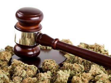 Gavel and cannabis buds