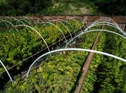 A cannabis farm in eastern Washington state
