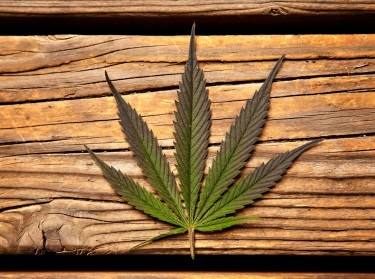 Marijuana leaf on a wood background