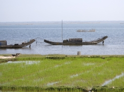 Fishing boats in the Mekong area of Vietnam