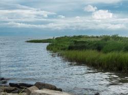 Louisiana marsh scene, north shore of Lake Pontchartrain