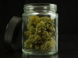 Open glass jar with cannabis inside