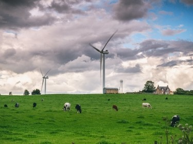 Wind turbines and cows on a field in Scotland, UK