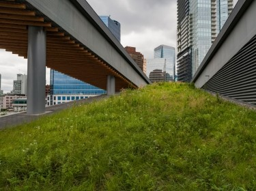 An urban green roof for stormwater management. Photo by RonTech2000 / Getty Images