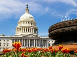 U.S. Capitol in spring