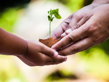 Child and adult hands holding a plant in an egg shell