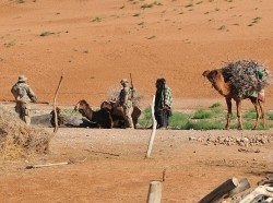 U.S. and Afghan soldiers search a camel's cargo