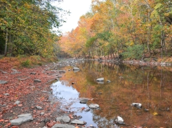 A stream runs through the woods in autumn