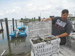 Crab fisherman Mike Taylor Jr. shows his catch of blue crabs in Pointe a la Hache near New Orleans, US, 6 April 2015. 20 April 2015 marks the 5th anniversary of the Deepwater Horizon catastrophe in the Gulf of Mexico which took place on 20 April 2010. Photo by Johannes Schmitt-Tegge/dpa/Alamy Live New