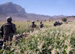 Soldiers walking through Afghan wheat field
