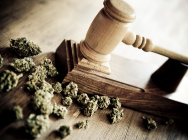 Marijuana buds and a gavel