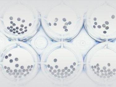 Cancer cells in petri dishes