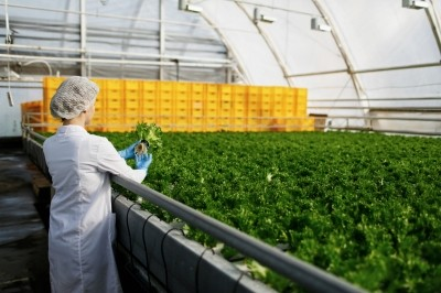 Senior scientist observes new breed of cress sprouts optimized for consumption in greenhouse
