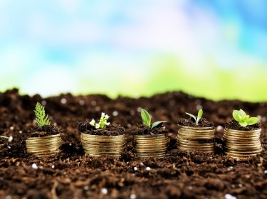 Coins in soil with seedling plants