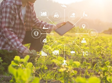 visual, icon, agriculture, technology, farming, smart, field, tablet, farmer, computer, agricultural, digital, internet, nature, people, sensor, wheat, plant, farm, network, man, crop, using, green, concept, natural, modern, harvest, background, sensors, food, male, vintage, agronomist, vegetable, read, report, analysis, person, plantation, summer, business, equipment, grass, outdoor