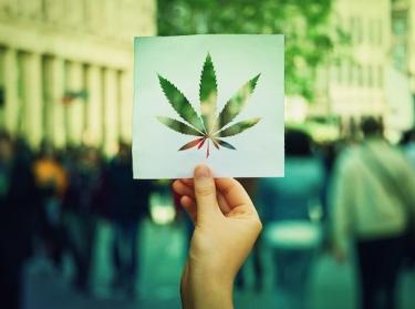 Marijuana leaf on a wood background