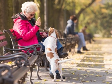 Elderly woman on a park bench with a dog