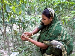 Woman working on TMSS supported, WB funded cucumber farming project
